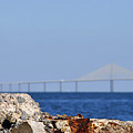 Snowy Egret and Sunshine Skyway Bridge Print by David Lee Thompson