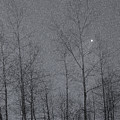 Snowy Winter Night Print by Marion McCristall
