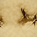 Song of the Angels in Sepia Print by Bill Cannon