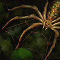 Steampunk - Spider - Arachnia Automata Poster by Mike Savad