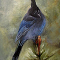 Stellar of a Bird Print by Mary St Peter
