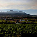 Stellenbosch Vineyard by Dale Halbur