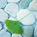 stones and a gingko leaf Poster by Priska Wettstein