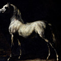 Study of a Dapple Grey Poster by Theodore Gericault