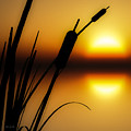 Summertime Whispers  Print by Bob Orsillo