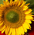 Sunflower with old key Poster by Garry Gay