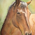 Sunlit Horse Print by Patricia Pushaw