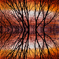 Sunset Tree Silhouette Abstract 2 Poster by James BO  Insogna