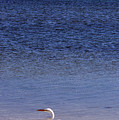 Sunshine Skyway Bridge with White Egret Print by Rose  Hill