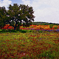 Texas Wildflowers Poster by Tamyra Ayles