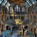 The Natural History Museum London UK Print by Donald Davis