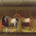 The Stables and Two Famous Running Horses belonging to His Grace - the Duke of Bolton Poster by James Seymour