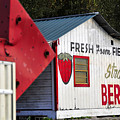This way for Strawberries Print by David Lee Thompson