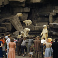 Tourists Watch Captive Polar Bears Poster by B. Anthony Stewart