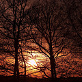 trees at sunset Print by Michal Boubin