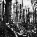 Trees at the entrance to the Valley of No Return Print by Simon Marsden