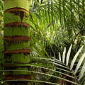 Tropical forest jungle Print by Les Cunliffe
