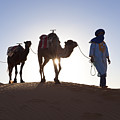 Tuareg Man With Camel Train, Sahara Desert, Morocc Poster by Peter Adams