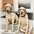 Tucker and Lily by Amy S Turner