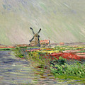 Tulip Field in Holland Poster by Claude Monet