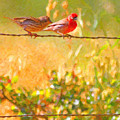 Two Birds On A Wire Poster by Wingsdomain Art and Photography