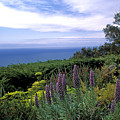 View from Ventana Big Sur Print by Kathy Yates