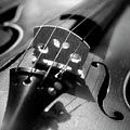 Violin Poster by Danielle Donders - Mothership Photography