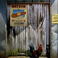 Waiting for Watson 2 Print by Doug Strickland