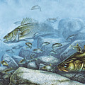 Walleye Reef Print by JQ Licensing
