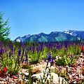 Wasatch Mountains In Spring Poster by Tracie Kaska