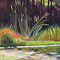 Water Garden Landscape Poster by Melody Cleary