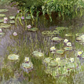 Waterlilies at Midday Poster by Claude Monet