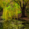 Weeping Pond Print by Fred Lassmann