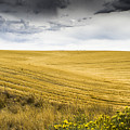 Wheat Fields With Storm Poster by John Trax