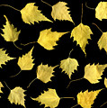 When Leaves Grow Old Print by Christian Slanec