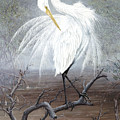White Egret Poster by KEVIN BRANT