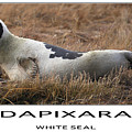 White Seal  Poster by Dapixara Art