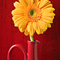 Yellow daisy in red vase Poster by Garry Gay