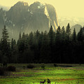 Yosemite Village Golden Poster by Wingsdomain Art and Photography