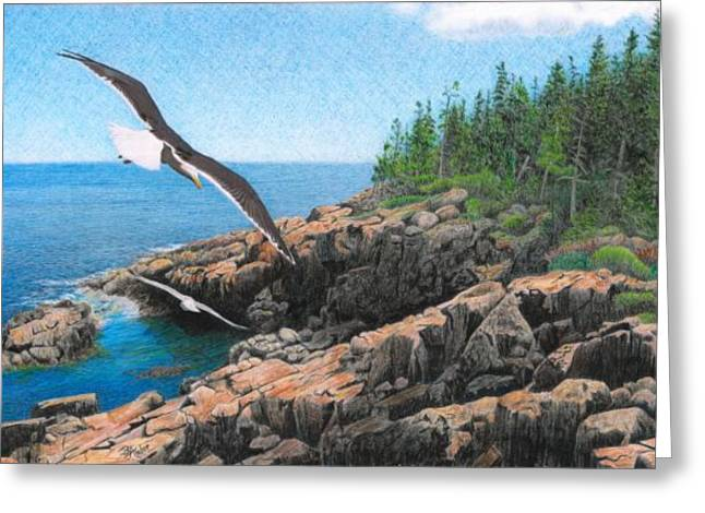 Crusing Otter Point Greeting Card by Brent Ander